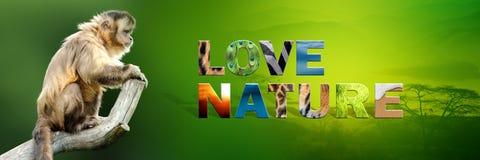 Affe mit Text Liebes-Natur Lizenzfreie Stockbilder