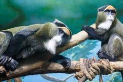 Affe mit traurigen Augen auf einem Baumast Stockbilder