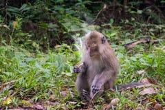 Affe mit Zigarette Stockfotos