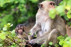 Affe, Mutter mit Baby Lizenzfreies Stockfoto