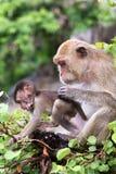 Affe, Mutter mit Baby Lizenzfreie Stockbilder