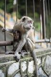 Affe-Mutter mit Baby auf Zaun Lizenzfreies Stockfoto