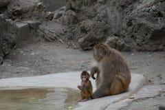 Affe-Mutter ` s Liebe Lizenzfreie Stockfotos