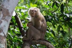 Affe Mutter und daugther Lizenzfreies Stockfoto