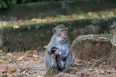 Affe-Mutter-und Kinder-Live In Khao Kheow Open-Zoo Lizenzfreies Stockbild