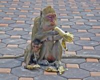 Affe-Mutter und Tochter Lizenzfreie Stockfotografie