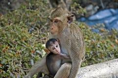 Affe-Mutter und Tochter Stockfotografie