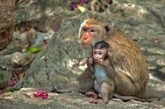 Affe-Mutter und Tochter Stockbild