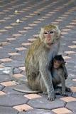 Affe-Mutter und Tochter Lizenzfreie Stockfotos
