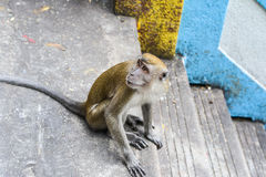 Affe nahe der Höhle in Malaysia Stockbilder