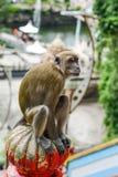 Affe nahe der Höhle in Malaysia Lizenzfreie Stockfotos