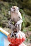 Affe nahe der Höhle in Malaysia Lizenzfreies Stockbild