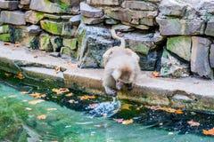 Affe nahe Wasser Stockfotos