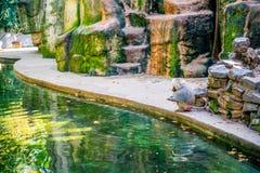 Affe nahe Wasser Lizenzfreies Stockbild