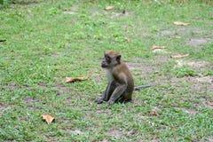 Affe in natürlichem YONG LING Beach Lizenzfreie Stockfotografie