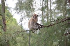 Affe in natürlichem YONG LING Beach Stockbilder