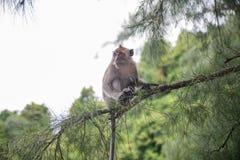 Affe in natürlichem YONG LING Beach Lizenzfreies Stockfoto
