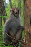 Affe in nationalem geologischem Park Zhangjiajie Stockfotos