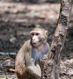 Affe am Nationalpark Lizenzfreie Stockfotos