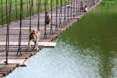Affe oder Makaken, die auf der alten Hängebrücke mit gree sitzen Lizenzfreies Stockbild