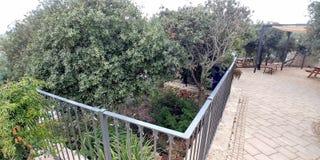 Affe-Park in Yodfat Stockfotografie