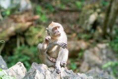 Affe in Phuket-Insel Stockbilder