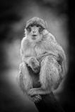 Affe-Porträt der wild lebenden Tiere in einem Baum Lizenzfreie Stockfotos
