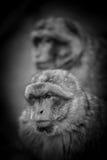 Affe-Porträt der wild lebenden Tiere in einem Park Lizenzfreie Stockfotografie