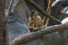Affe in Prag-Zoo lizenzfreie stockfotos