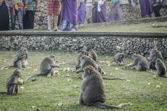 Affe in Pura Luhur Uluwatu-Tempel, Bali Lizenzfreie Stockbilder