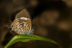 Affe-Puzzlespiel-Schmetterling Stockbild