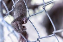 Affe ` s Tatze auf dem Käfig Ein wildes Tier leer vom Willen Das Greenpeace-Konzept Lizenzfreie Stockfotos