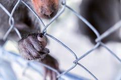 Affe ` s Tatze auf dem Käfig Ein wildes Tier leer vom Willen Das Greenpeace-Konzept Stockfoto