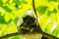 Affe schaut auf einem Baum Lizenzfreie Stockfotografie