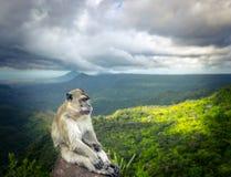 Affe am Schluchtstandpunkt mauritius Stockfotos