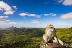 Affe am Schluchtstandpunkt mauritius Panorama Stockfotos