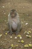 Affe sehen Lebensmittel auf dem Boden Lizenzfreies Stockfoto