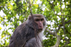 Affe in Shoushan, Affe-Berg in Kaohsiung city-6 Stockfoto