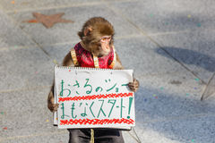 Affe-Show bei Kitano District in Kobe Stockbilder