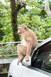 Affe sitzen auf Auto Lizenzfreies Stockfoto