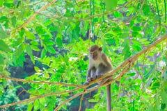 Affe sitzen auf dem Baum, den die Leben in einem Naturwald mit Kopienraum Text addieren Stockbild