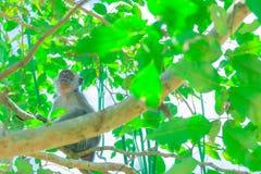 Affe sitzen auf dem Baum, den die Leben in einem Naturwald mit Kopienraum Text addieren Stockfotografie