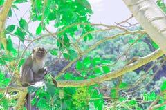 Affe sitzen auf dem Baum, den die Leben in einem Naturwald mit Kopienraum Text addieren Stockbilder