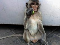 Affe sitzen auf dem Boden Lizenzfreies Stockfoto