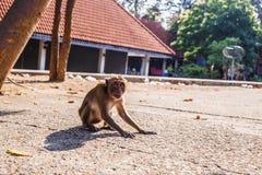 Affe sitzen auf dem Boden Lizenzfreie Stockbilder