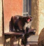 Affe sitzen auf der speziellen Unterstützung Stockbild