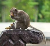 Affe sitzen auf einem Stein Stockfoto