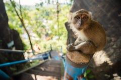 Affe sitzen auf Treppe im Sonnenlicht Stockfotos