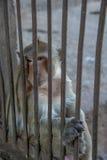 Affe sitzen hinter dem Käfig Stockfotografie