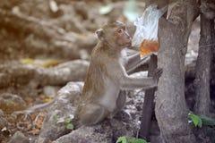 Affe sitzen und warten auf Lebensmittel Lizenzfreie Stockbilder